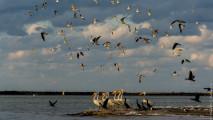 http://sharlaev.ru/wp-content/uploads/2013/03/20130302_Mexico_Rio_Lagartos_IMG_4176-213x120.jpg